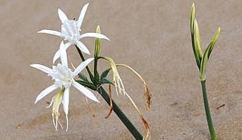 Bu çiçeği koparmanın cezası 48 bin TL