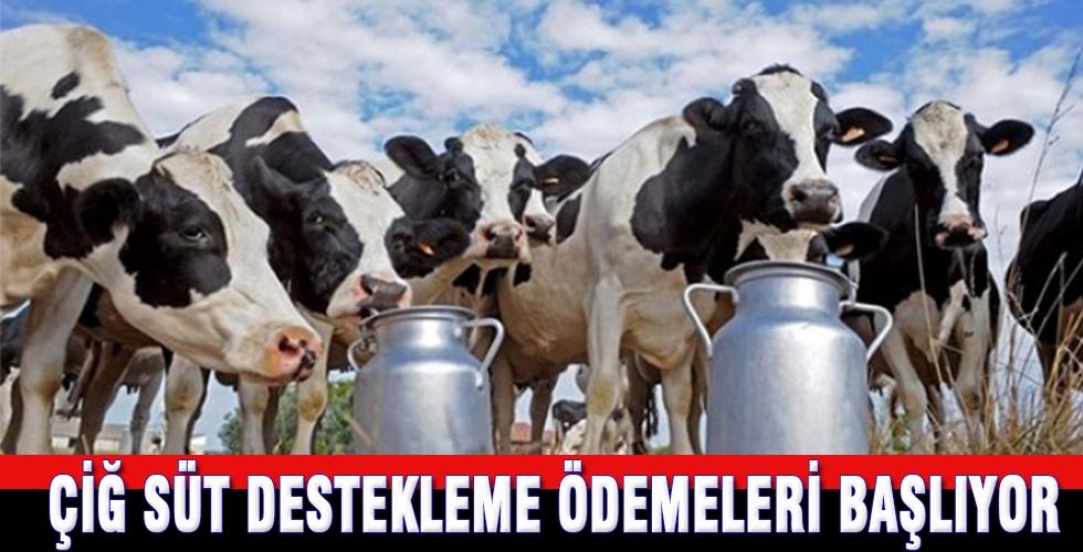 Çiğ süt destekleme ödemeleri başlıyor