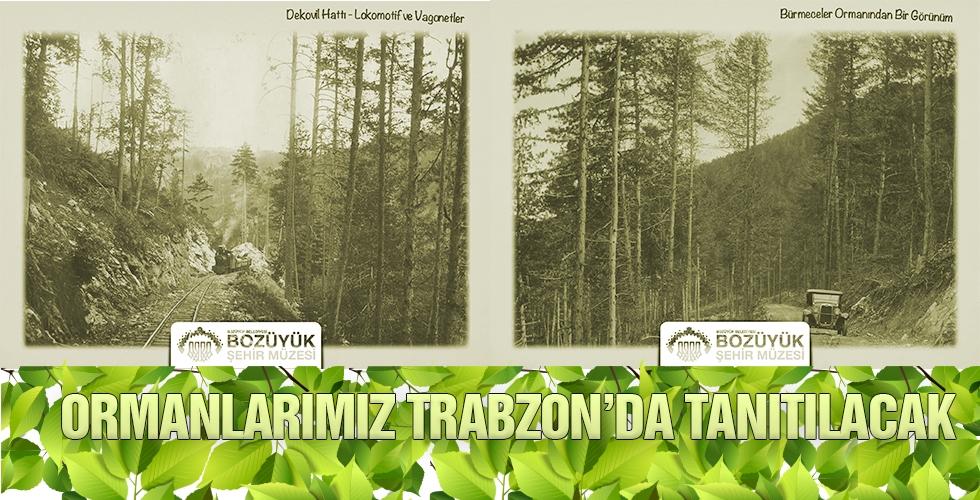 ORMANLARIMIZ TRABZON'DA TANITILACAK