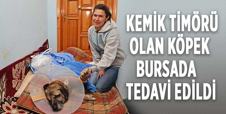 Kemik timörü olan köpek Bursada tedavi edildi