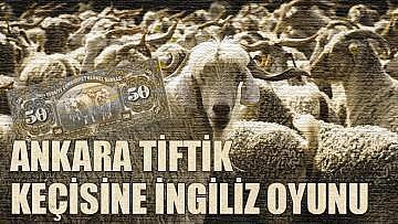 Ankara Tiftik keçisine İngiliz oyunu