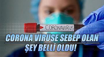 Corona virüse sebep olan şey belli oldu!