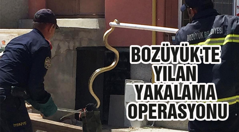 Bozüyük'te yılan yakalama operasyonu