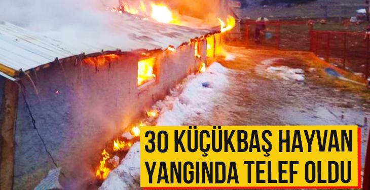 30 küçükbaş hayvan yangında telef oldu